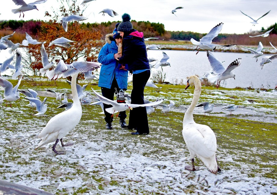 Feeding birds at Queen Elizabeth 2 Country park near Ashington Northumberland UK
