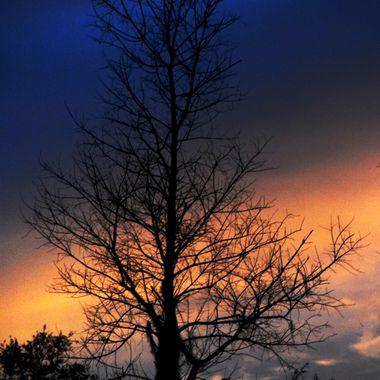 Tree at Sundown in January