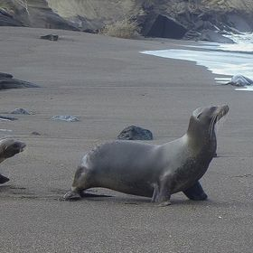 Sea lions are abundant in the Galapagos