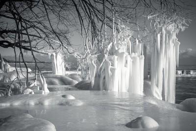 Ice Meeting Trees
