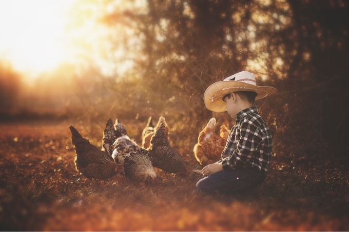 Bubba and his chickens by dellaina - Covers Photo Contest Vol 44