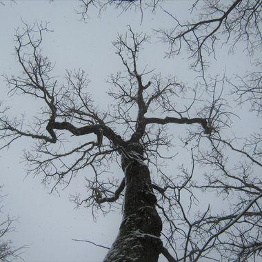 Sinister tree