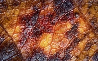 Marco photo of an autumn leaf