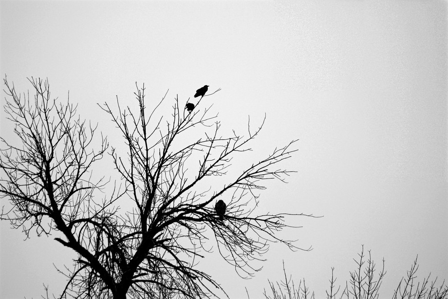 It was a wet and cold Chicago day.  The original photo lacked any depth or character.  Removing t...