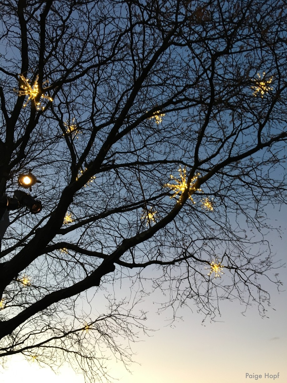 Lights in tree Branches Christmas in NY