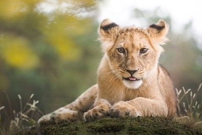 Young queen of the jungle