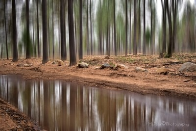 Blurred Reflections...