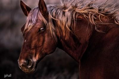 Horse Head San Angelo Texas