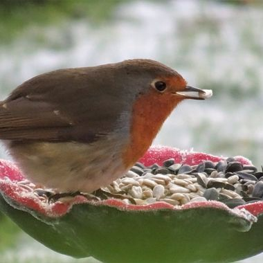 Love putting out food in my garden during the frosty weather and watching all the visitors