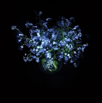Flowers of forget-me-nots