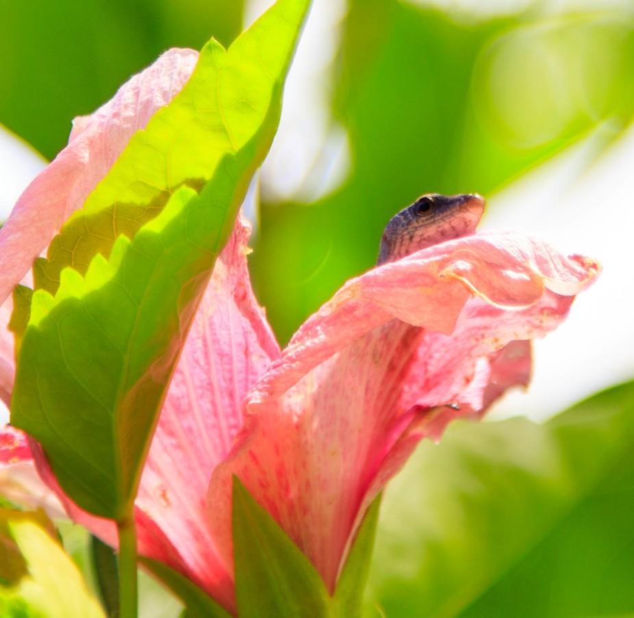 Flower with Skink, Rarotonga