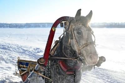 Horse on the bank of the river Tom, near town Yurga, Kemerovo region, Siberia, Russia