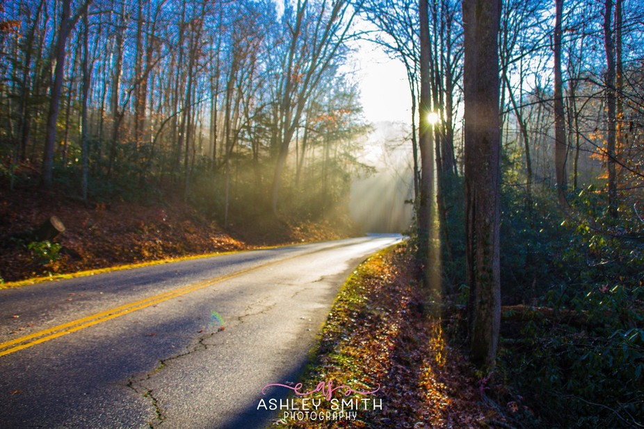 While on vacation traveling along The Great Smoky Mountain Parkway we came around a curve and saw...