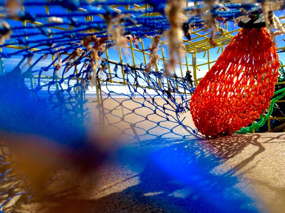 Picture from a inside a lobster trap