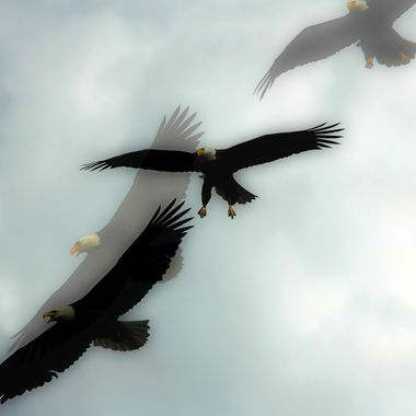 2 bald eagles that accidently got double exposed