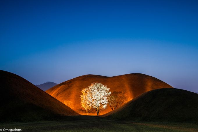 Tree of White by omegashot - Explore Asia Photo Contest