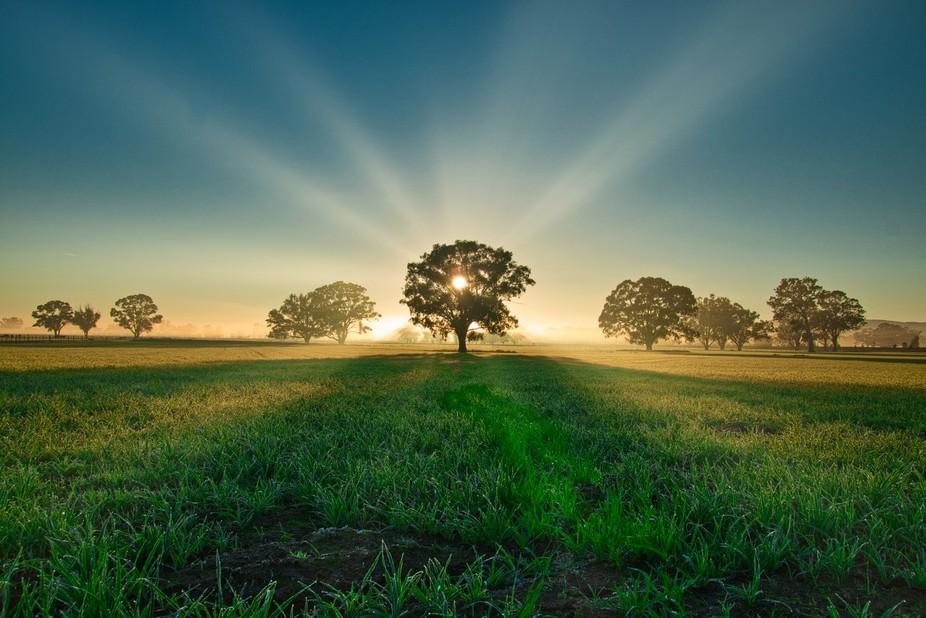 The Dawn Rising