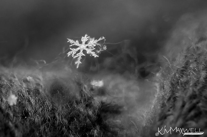 Winter Details by KiminWNC - Winter In Black And White Photo Contest