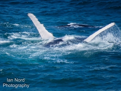 Mother and Baby Humpback