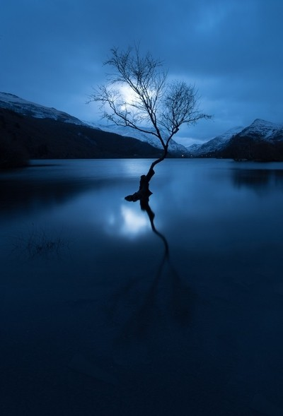The lonely tree at Blue hour