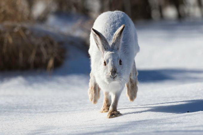Did you say carrots!?!?! by sandythompson - Winter Wildlife Photo Contest