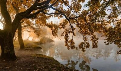 Over de herfst, het licht en de mist. © Александр Плеханов http:--plexanov.35photo.ru- door Theo-Herbots-Fotograaf