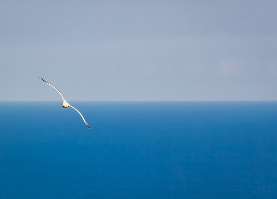 Be free like this giant albatross! It flew slowly and gracefully. It seemed like the whole world ...