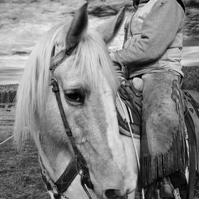 A Working cowboy and his new Palomino cow horse at a family branding on a friend's ranch.