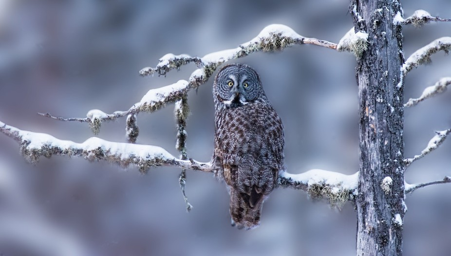 On a winter trip to Minnesota, to photograph the Great Gray Owls, I was frustrated with backdrops...