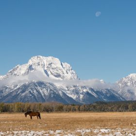 A single horse under Mt Moran in the Grand Teton Range.