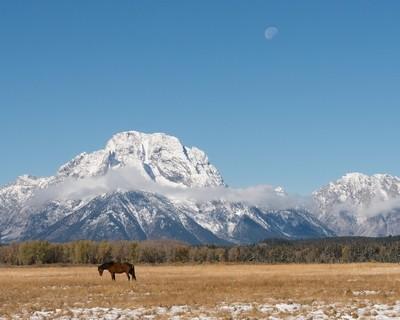 MT Moran Horse