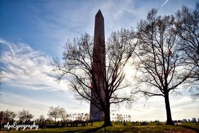 Washington Monuments and Trees Shilhouette