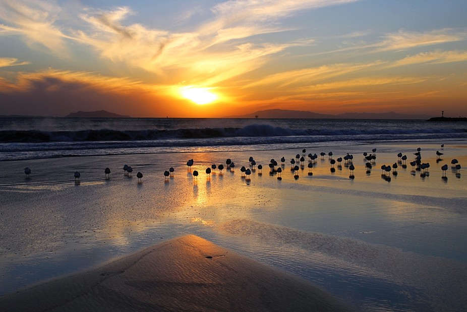 Hanging with the birds at sunset