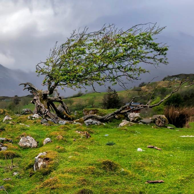 Taken on the Isle of Skye in a sheep pasture on a rainy day.