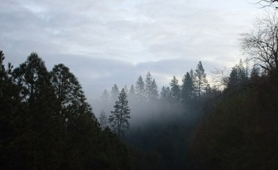 January 2018, Marshall Grade, california, landscape, landscsape, lyoung403b, trees