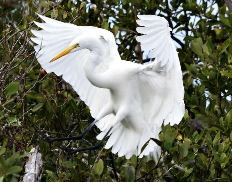Landing Heron