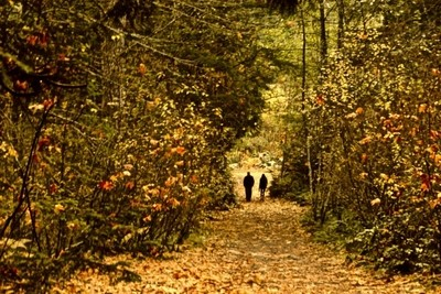 2 On A Forest Path