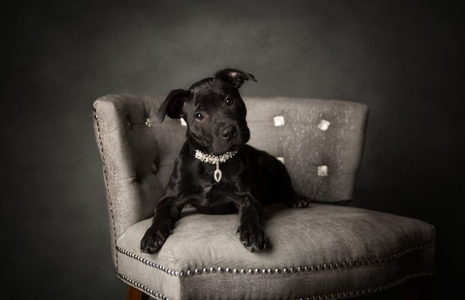 Stella by gbutts1121 - My Favorite Chair Photo Contest