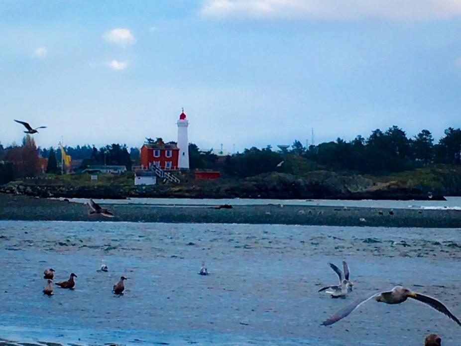 Gulls taking advantage of low tide