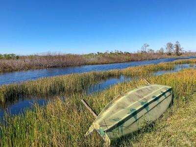 Canoe in a swamp