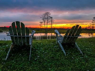 adirondack chairs and one tree
