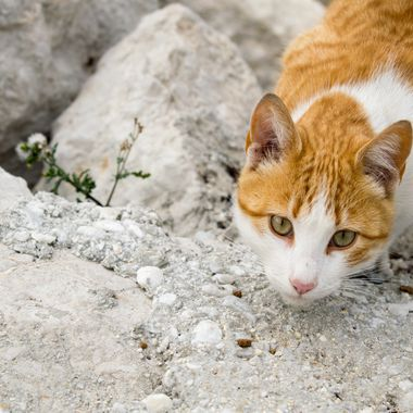 a cat on the hunt for mice at my local port in Marbella, Spain