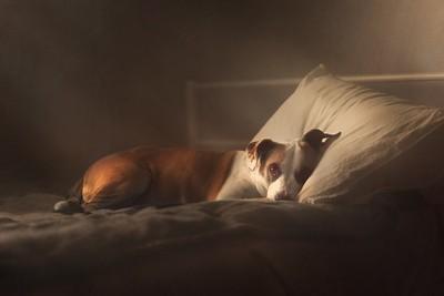 Belle's Bed
