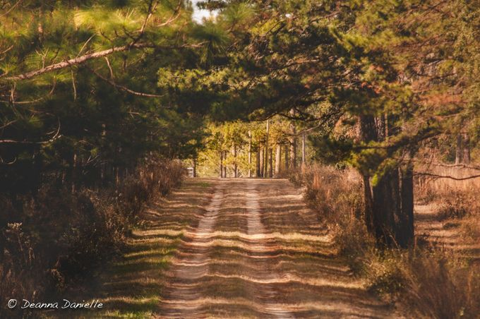 Into the Light by deannadanielle - Rural Vistas Photo Contest