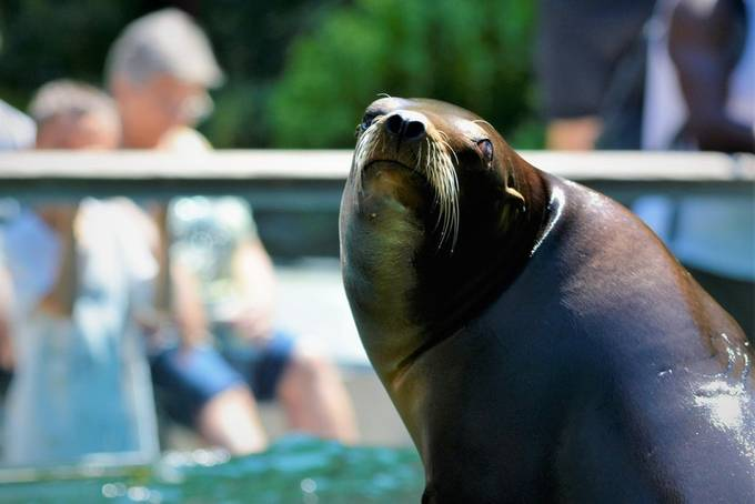 You have to excuse me, I have this ironic sense of humor at times and that Seal had been showing off and it looks like she wanted to make sure I got her.  She did put a good show afterward.