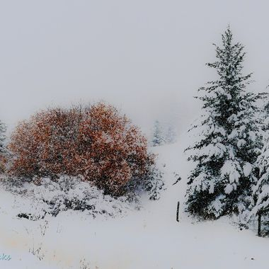 Snow on the trees and fog in the air .. a good time to take picyures