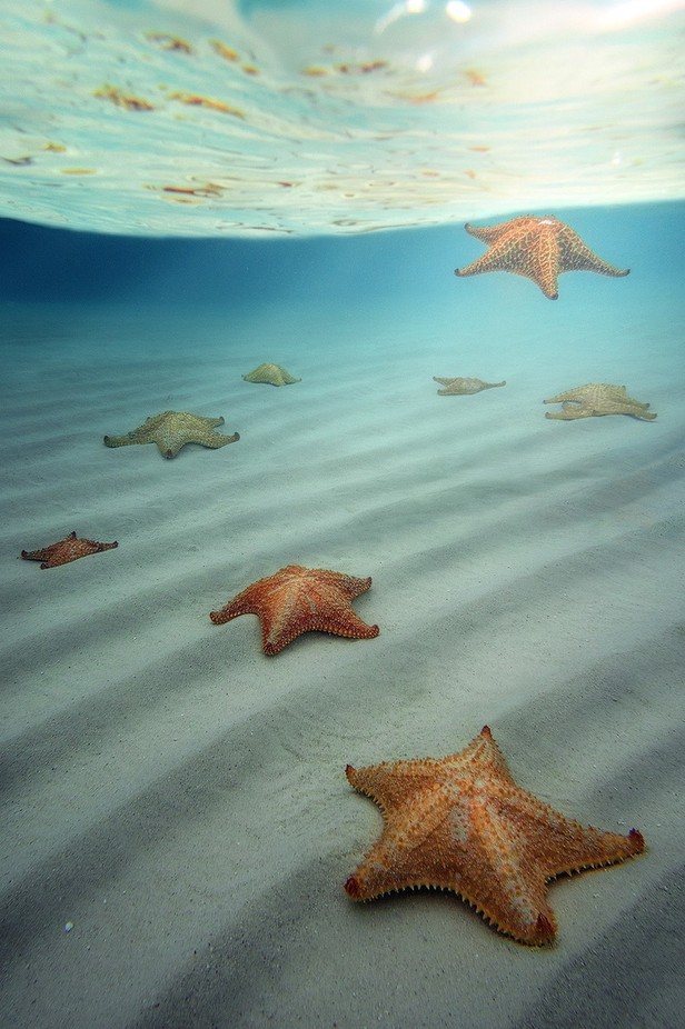 """When The Stars Align"" by ericbennett - Wildlife And Water Photo Contest"