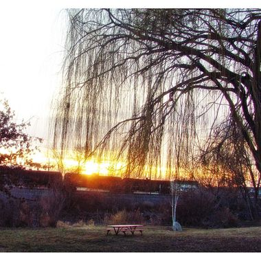 Weeping Willow Silhouette