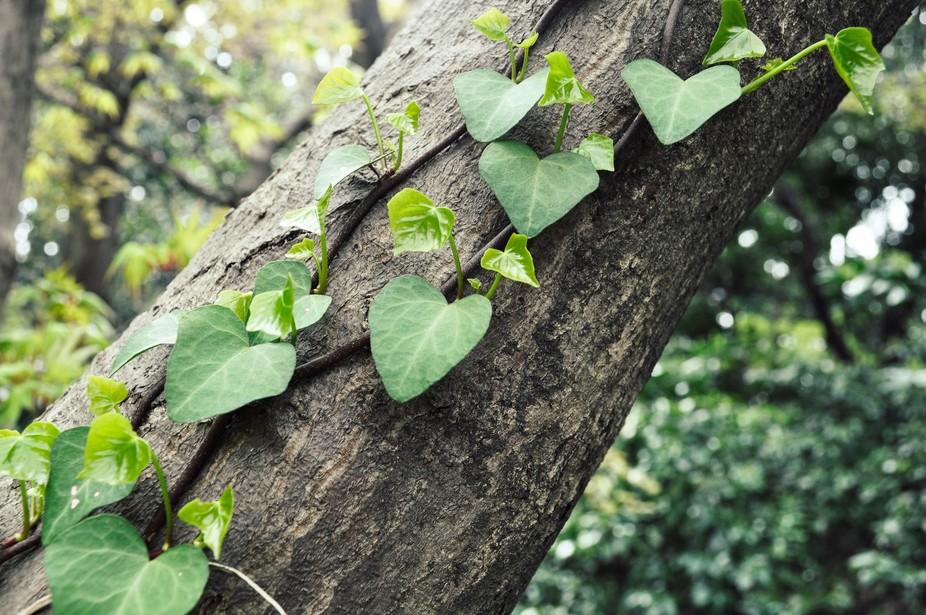 Nature hearts
