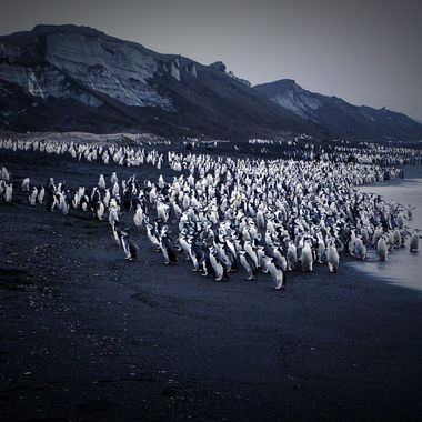 Penguin life in Antarctica!